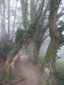 1008 El bosquie encantado_1231x1642